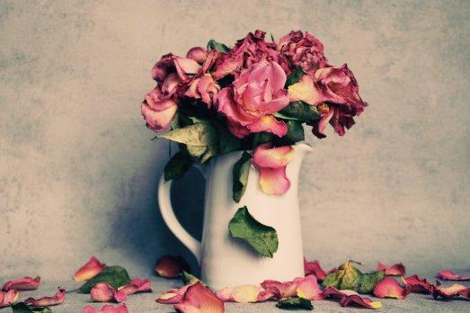 roses-4125558_1280
